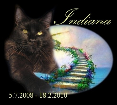 indiana-most.jpg
